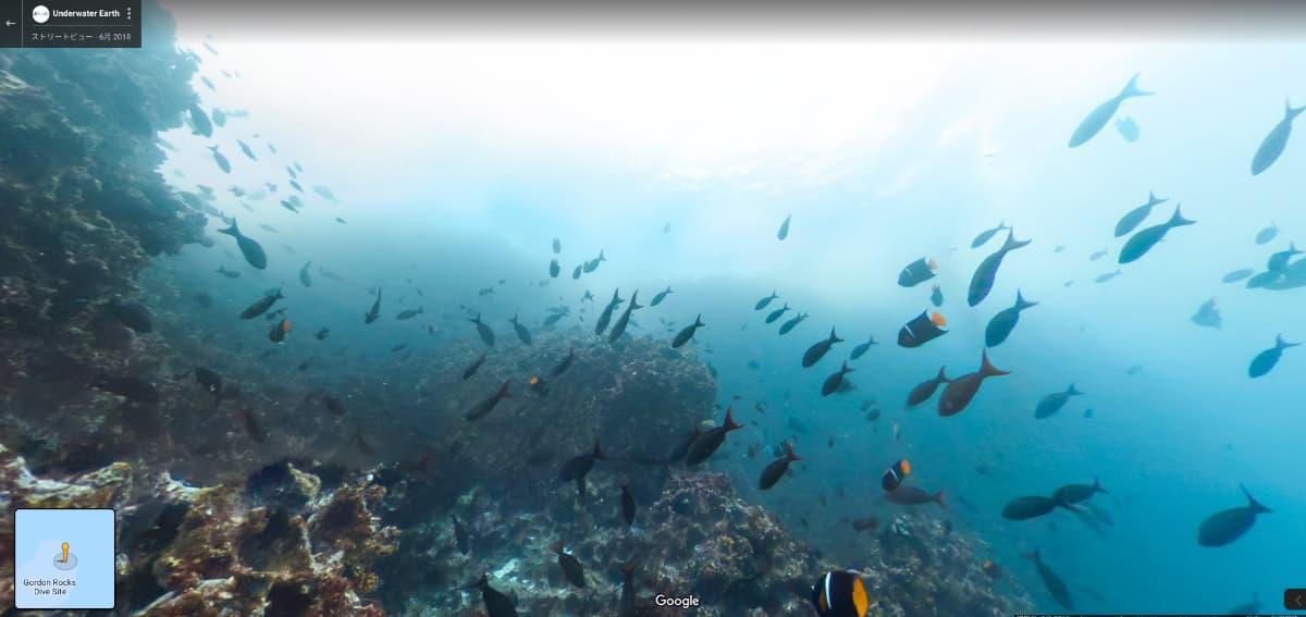 ガラパゴス諸島の海の中2