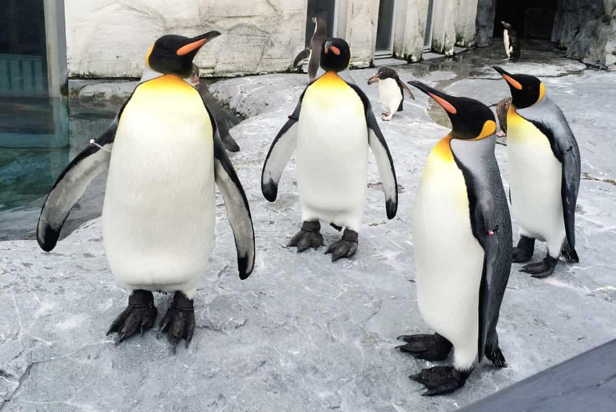 会話に入れないペンギン